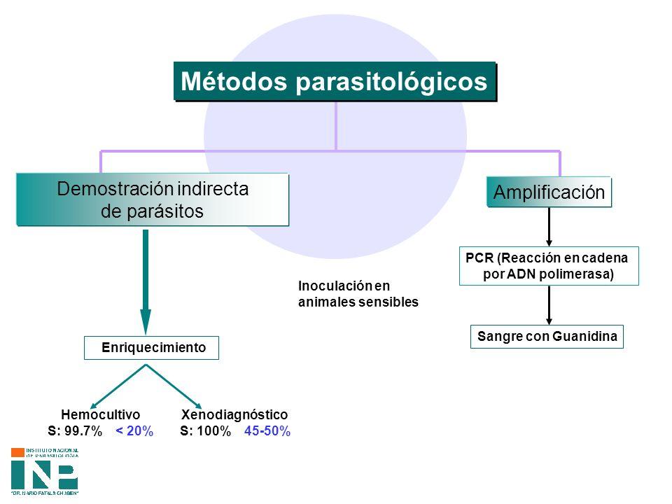 PCR (Reacción en cadena