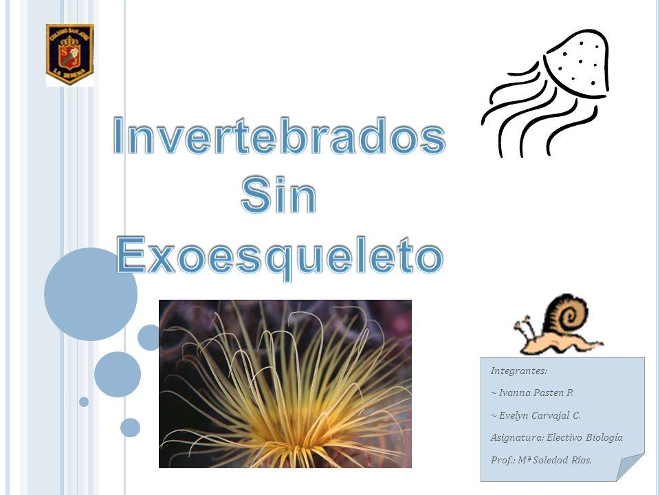 Invertebrados Sin Exoesqueleto