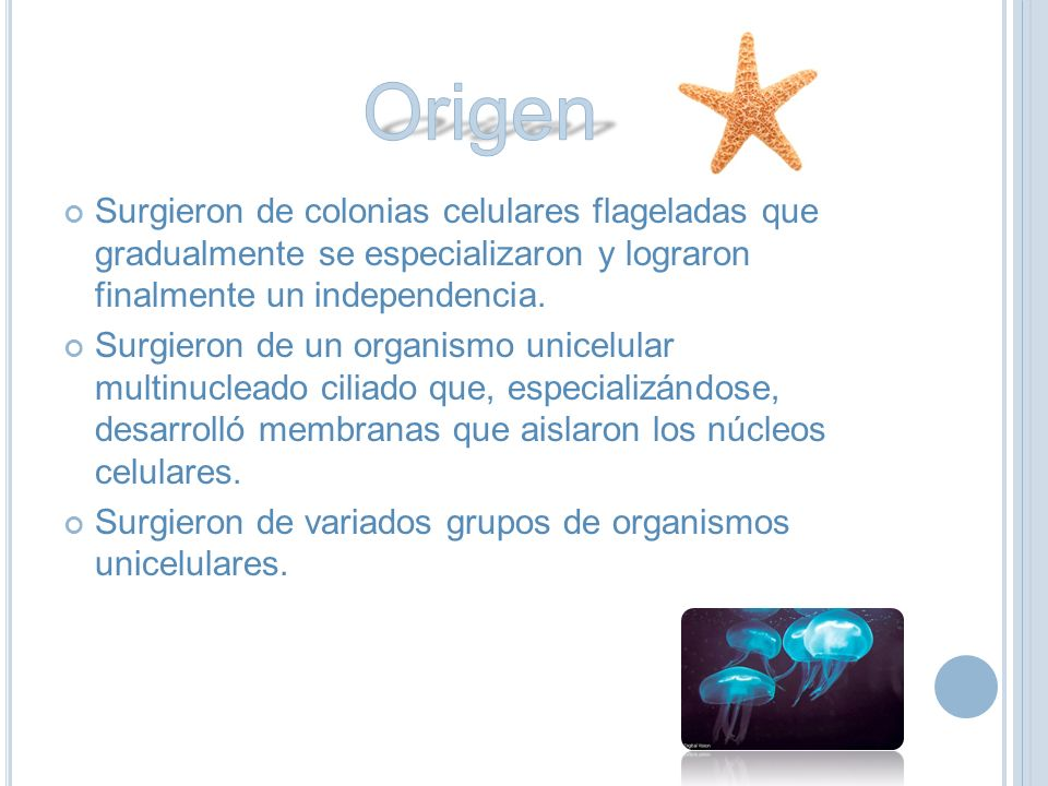Origen Surgieron de colonias celulares flageladas que gradualmente se especializaron y lograron finalmente un independencia.