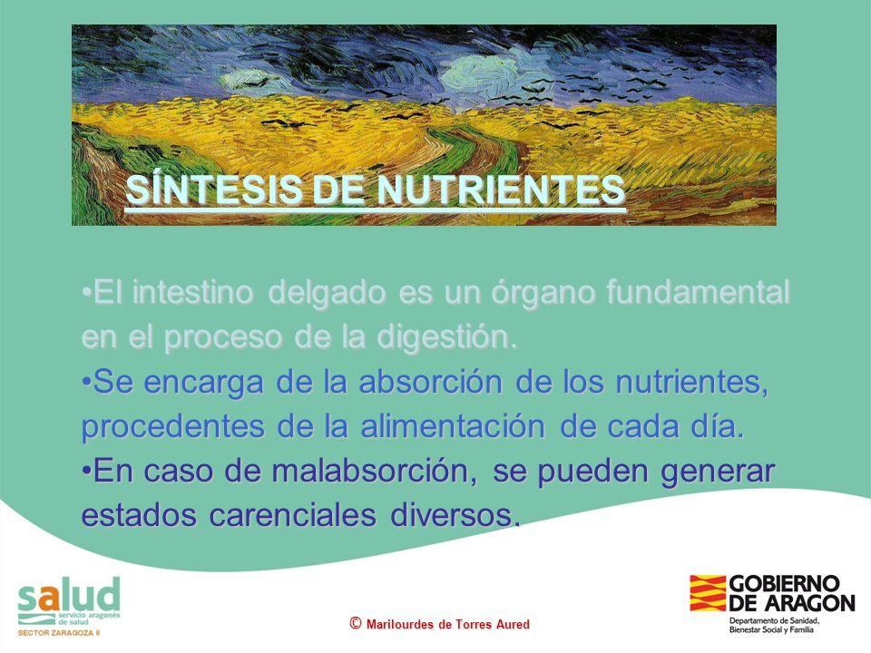 SÍNTESIS DE NUTRIENTES
