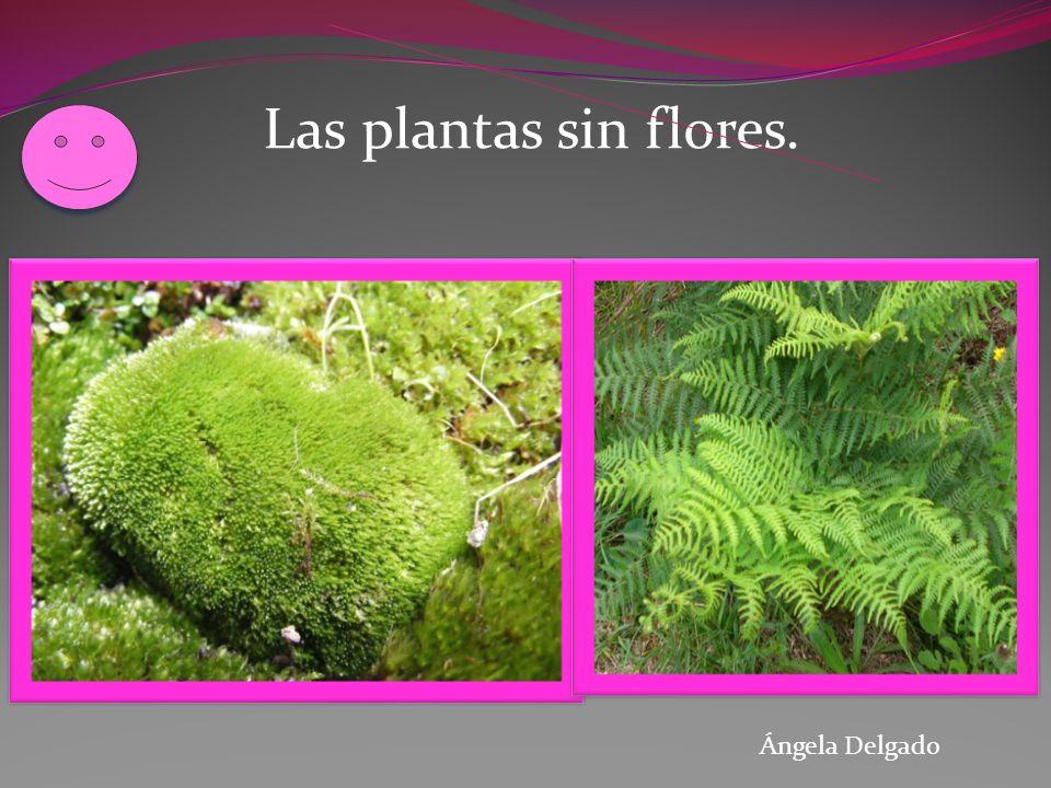 Las plantas sin flores. Plantas sin flores Ángela Delgado