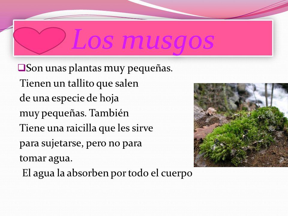 Los musgos Son unas plantas muy pequeñas. Tienen un tallito que salen