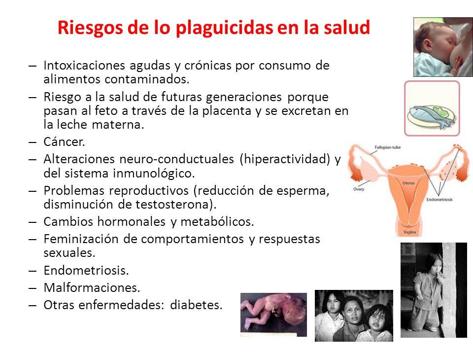 Riesgos de lo plaguicidas en la salud