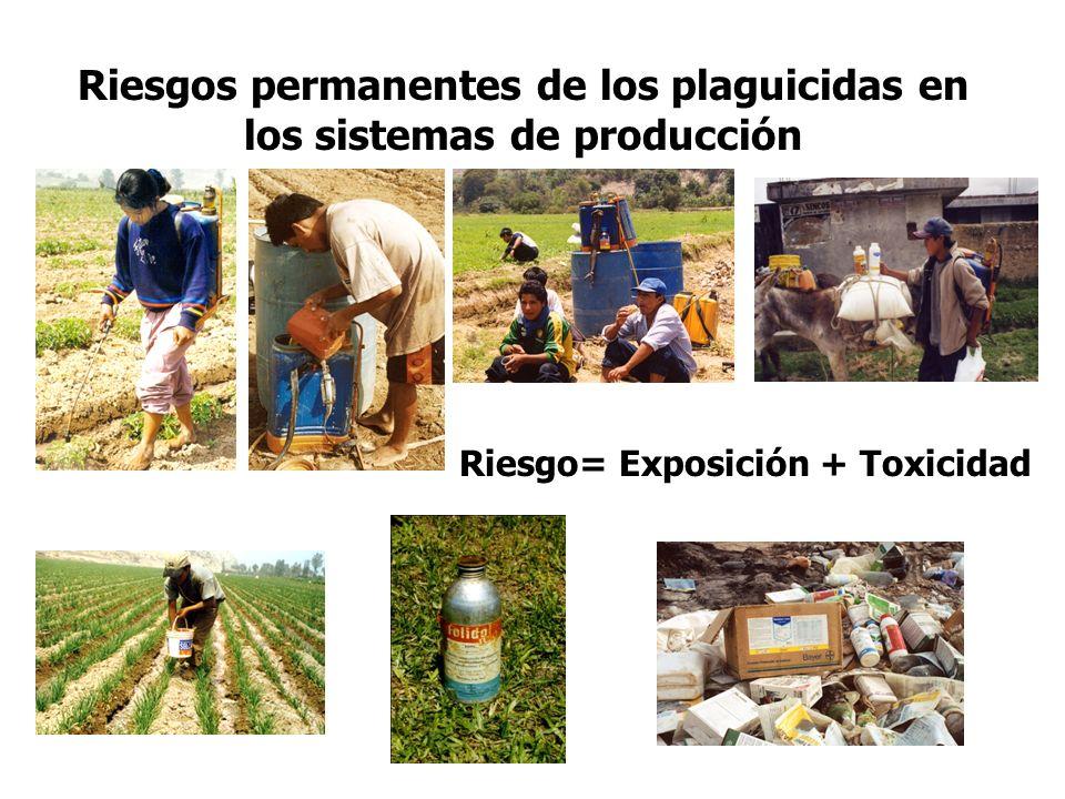 Riesgos permanentes de los plaguicidas en los sistemas de producción