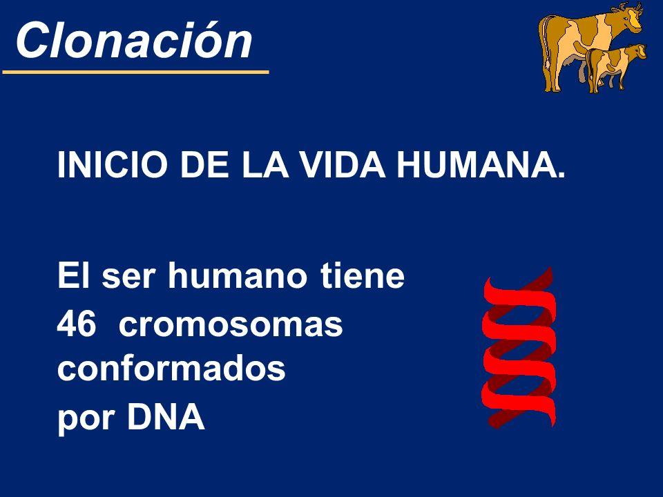 INICIO DE LA VIDA HUMANA. El ser humano tiene