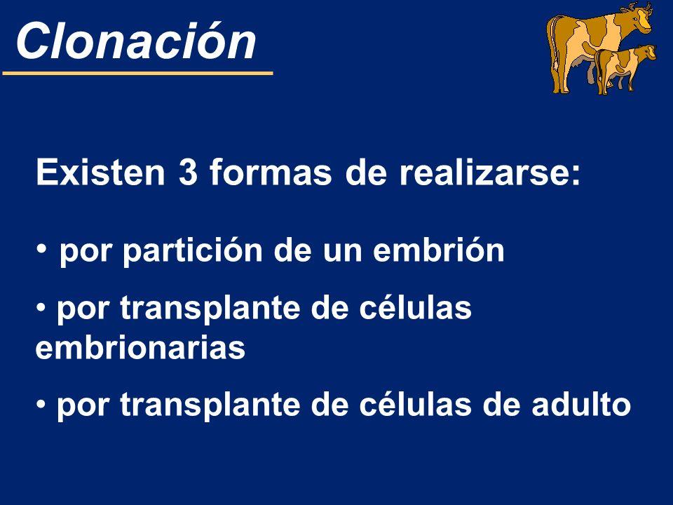 Existen 3 formas de realizarse: por partición de un embrión