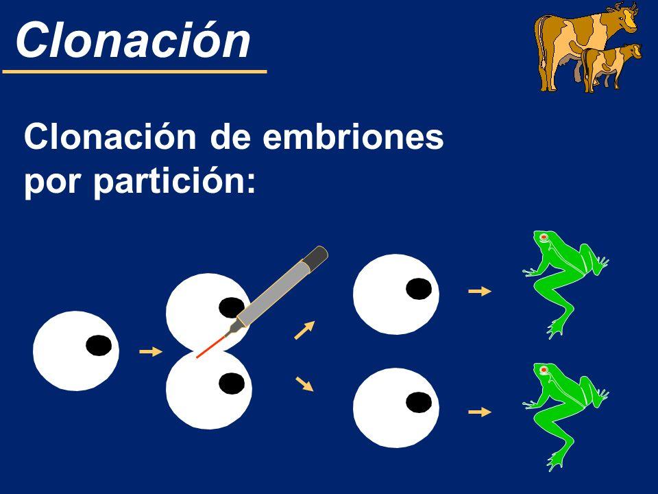 Clonación de embriones por partición: