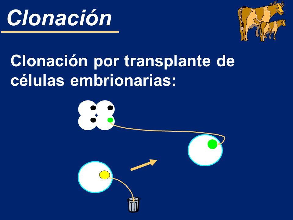 Clonación por transplante de células embrionarias: