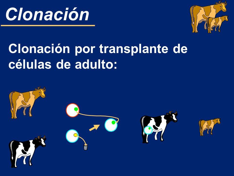 Clonación por transplante de células de adulto: