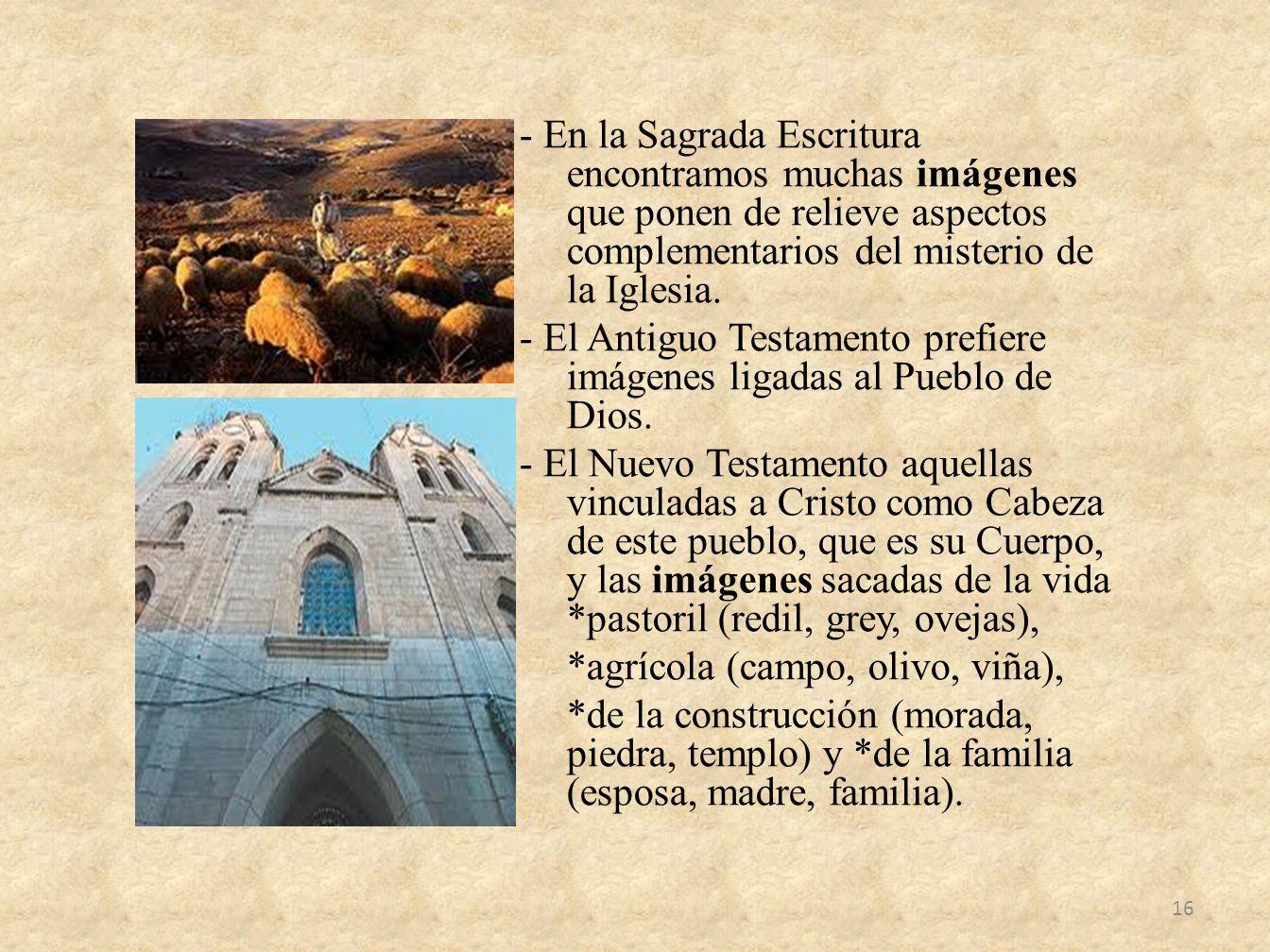 - En la Sagrada Escritura encontramos muchas imágenes que ponen de relieve aspectos complementarios del misterio de la Iglesia.