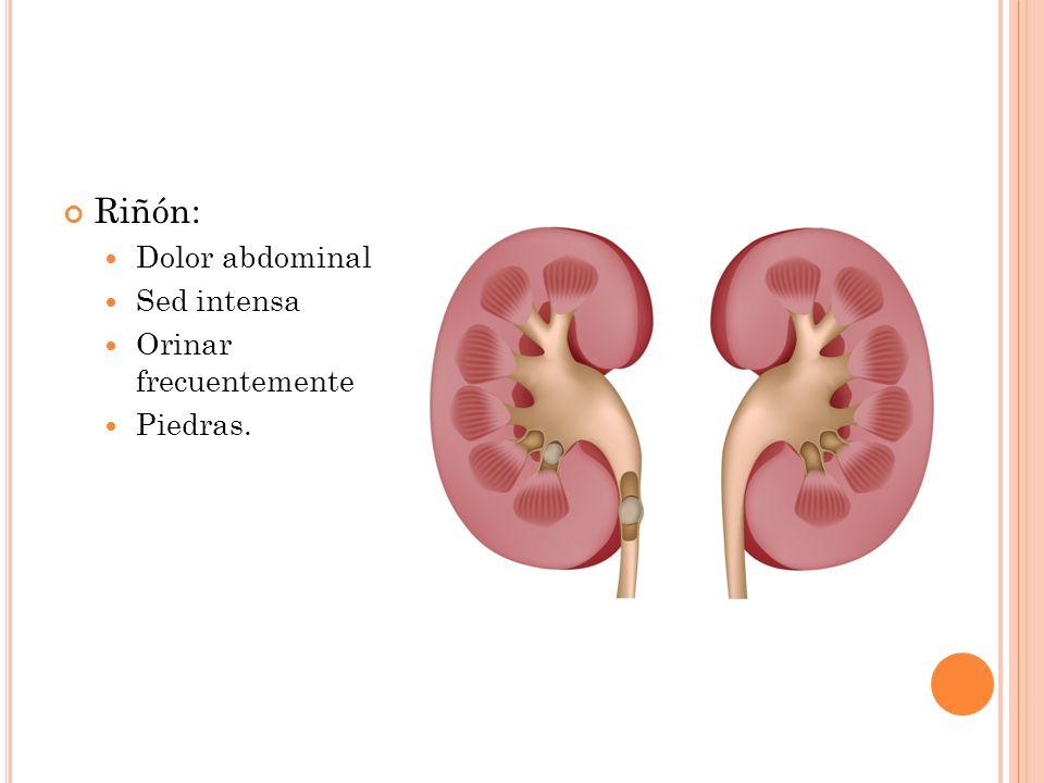 Riñón: Dolor abdominal Sed intensa Orinar frecuentemente Piedras.