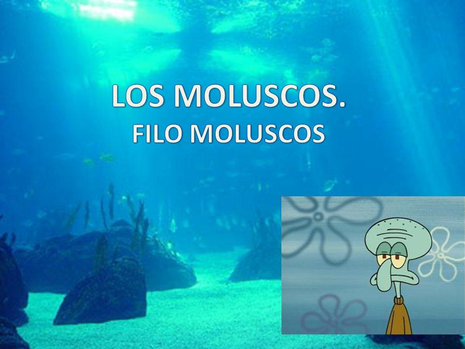 LOS MOLUSCOS. FILO MOLUSCOS