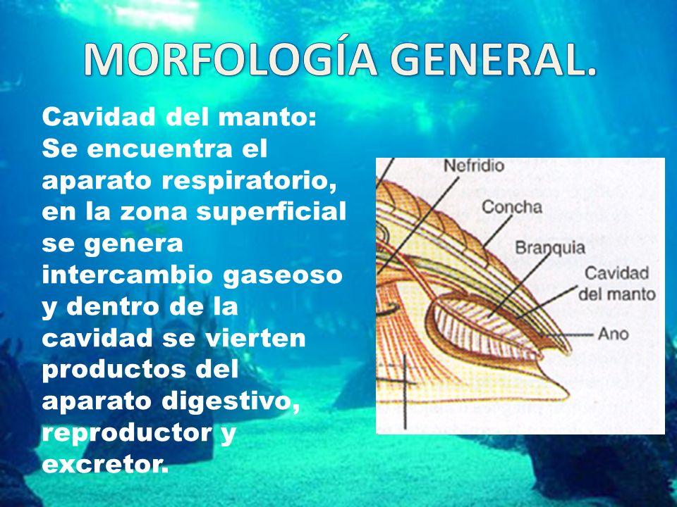 MORFOLOGÍA GENERAL.