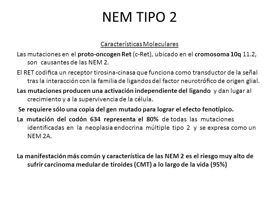 NEM TIPO 2
