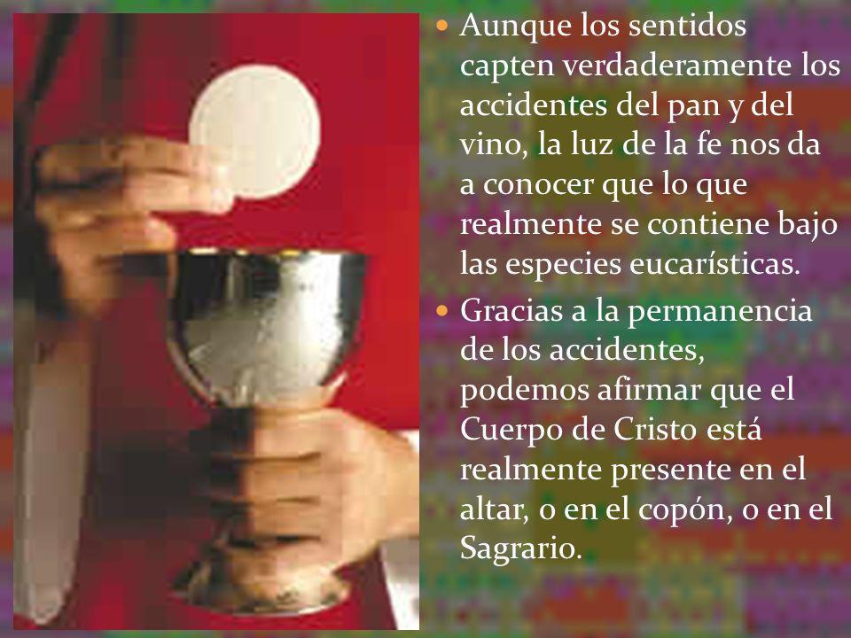 Aunque los sentidos capten verdaderamente los accidentes del pan y del vino, la luz de la fe nos da a conocer que lo que realmente se contiene bajo las especies eucarísticas.