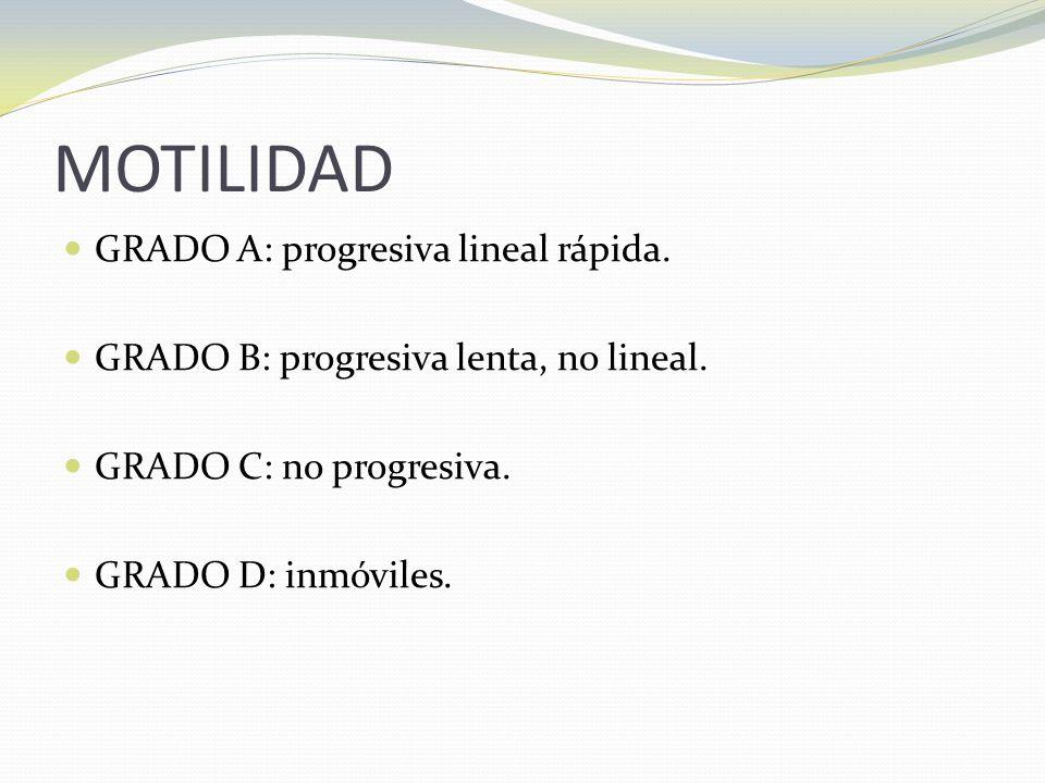 MOTILIDAD GRADO A: progresiva lineal rápida.