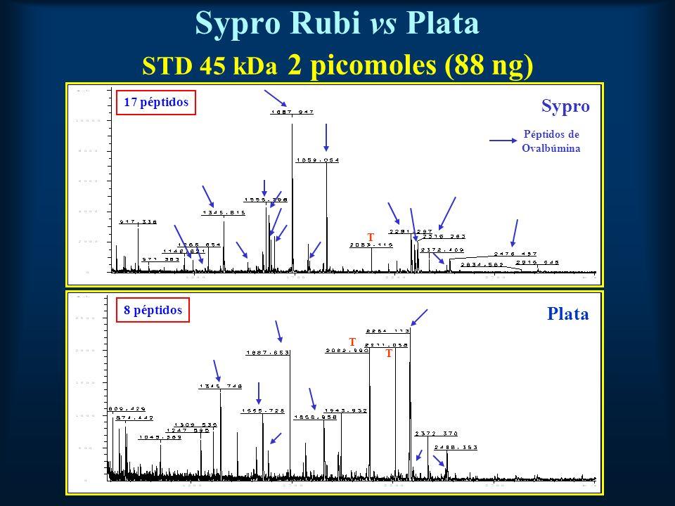 Sypro Rubi vs Plata STD 45 kDa 2 picomoles (88 ng)