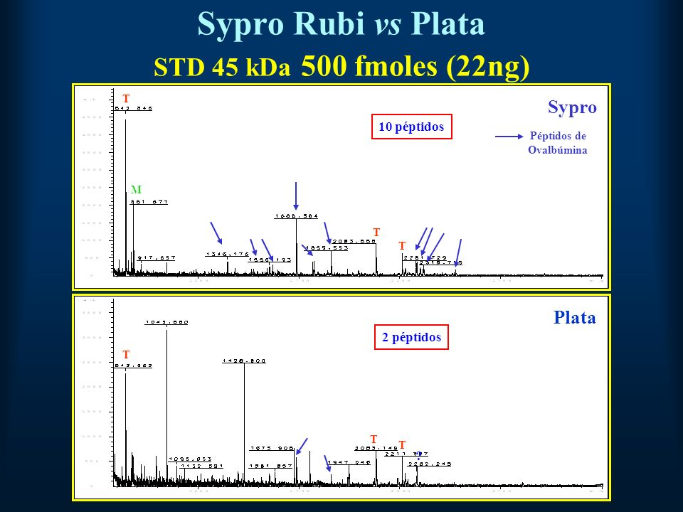 Sypro Rubi vs Plata STD 45 kDa 500 fmoles (22ng)