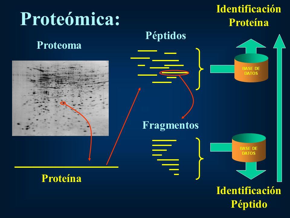 Identificación Proteína Identificación Péptido