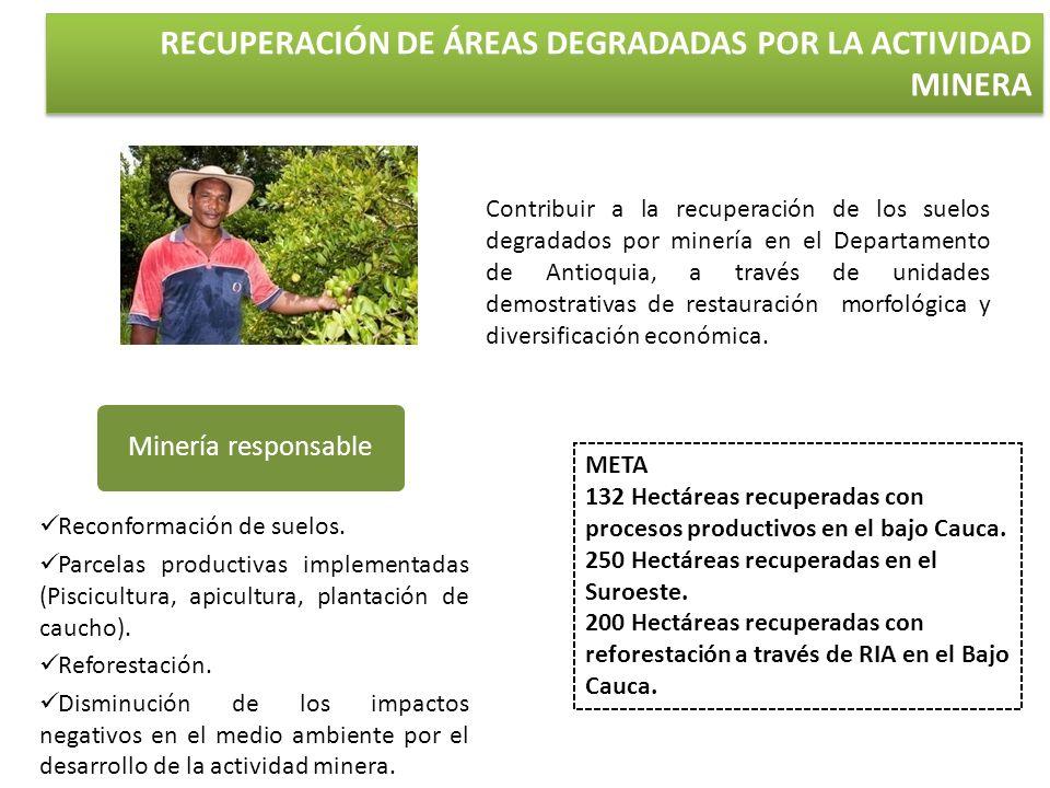 RECUPERACIÓN DE ÁREAS DEGRADADAS POR LA ACTIVIDAD MINERA