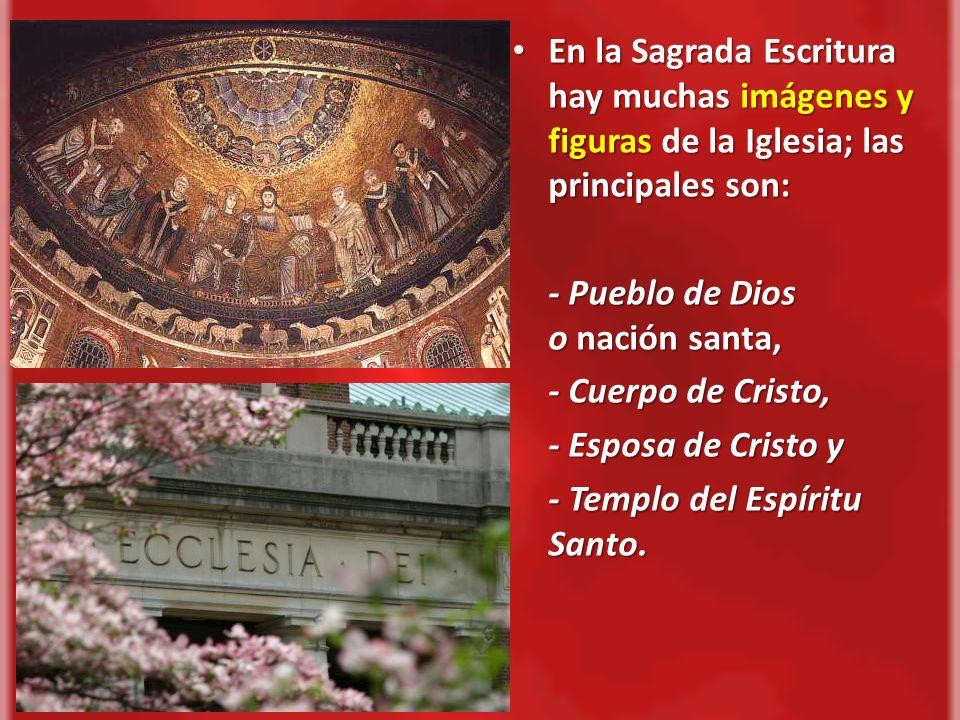 En la Sagrada Escritura hay muchas imágenes y figuras de la Iglesia; las principales son: