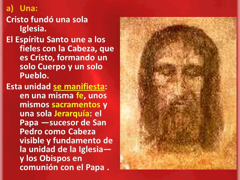 Una:Cristo fundó una sola Iglesia. El Espíritu Santo une a los fieles con la Cabeza, que es Cristo, formando un solo Cuerpo y un solo Pueblo.