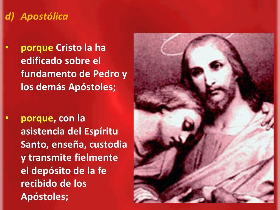 Apostólica porque Cristo la ha edificado sobre el fundamento de Pedro y los demás Apóstoles;