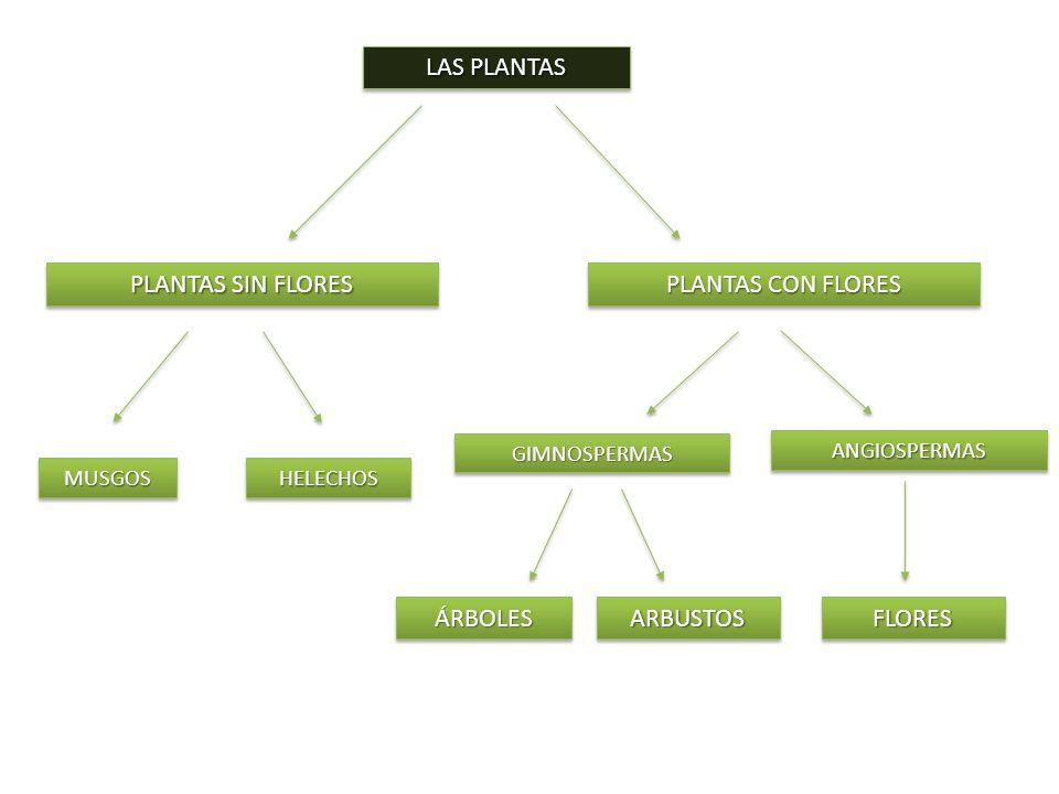 PLANTAS SIN FLORES LAS PLANTAS PLANTAS CON FLORES ÁRBOLES ARBUSTOS