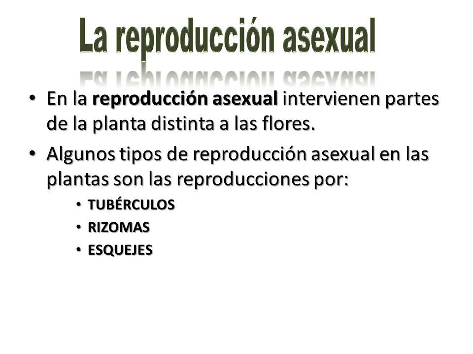 La reproducción asexual