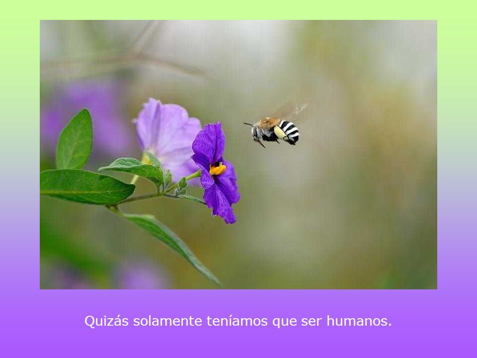 Quizás solamente teníamos que ser humanos.