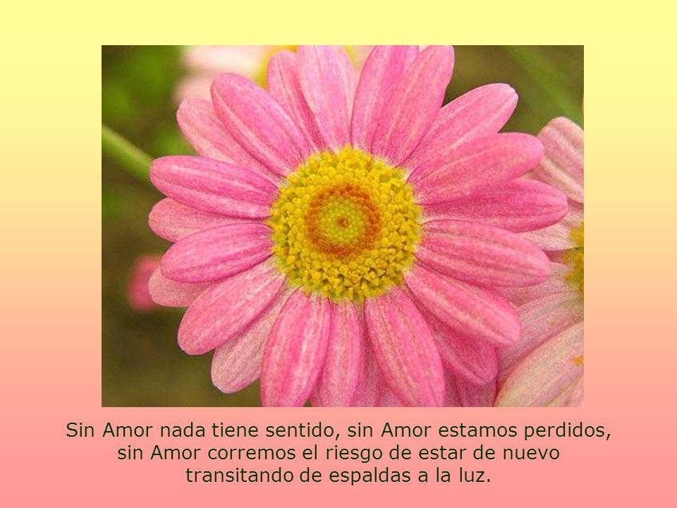 Sin Amor nada tiene sentido, sin Amor estamos perdidos, sin Amor corremos el riesgo de estar de nuevo transitando de espaldas a la luz.