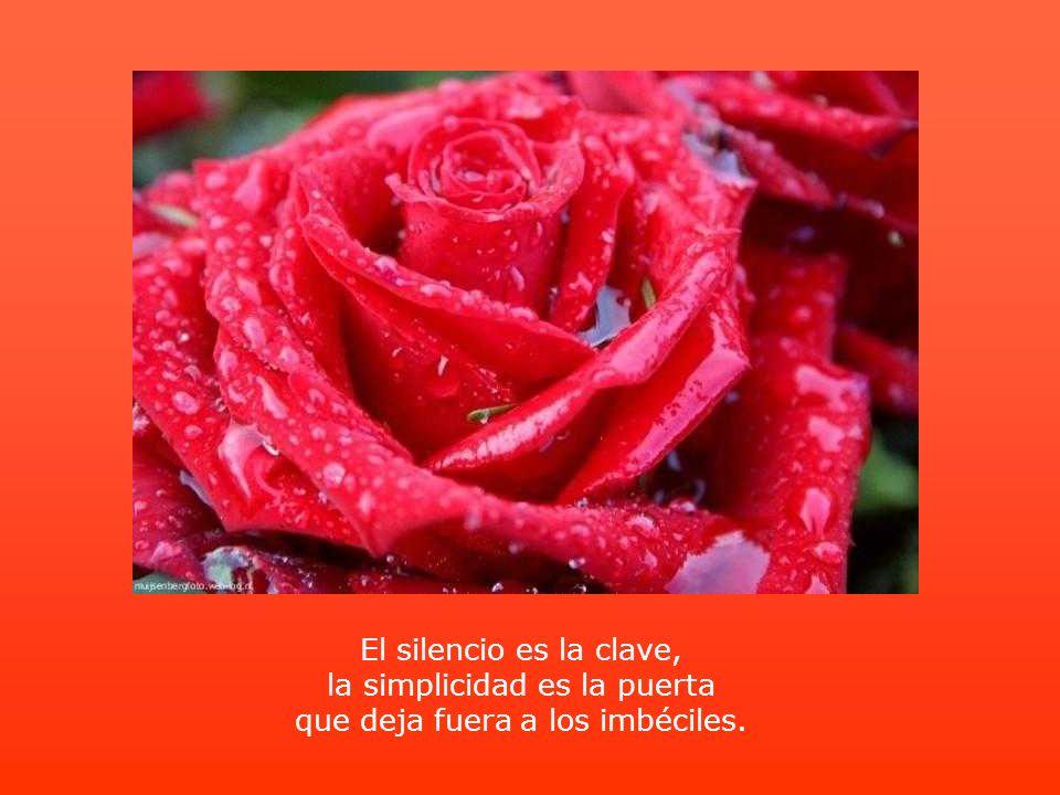 El silencio es la clave, la simplicidad es la puerta que deja fuera a los imbéciles.
