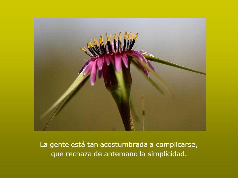 La gente está tan acostumbrada a complicarse, que rechaza de antemano la simplicidad.
