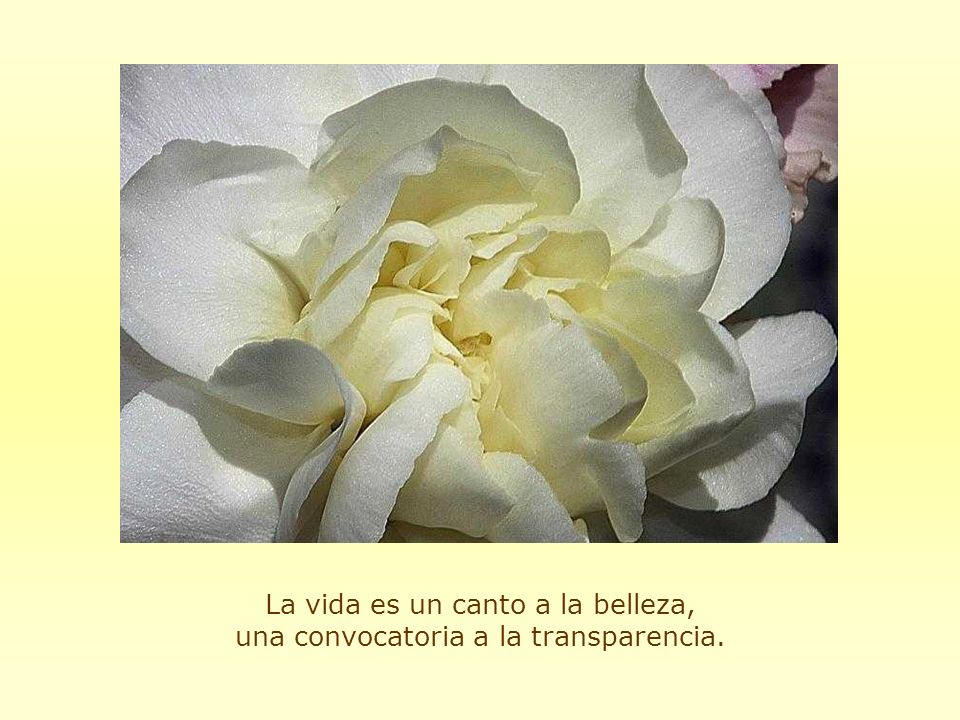 La vida es un canto a la belleza, una convocatoria a la transparencia.