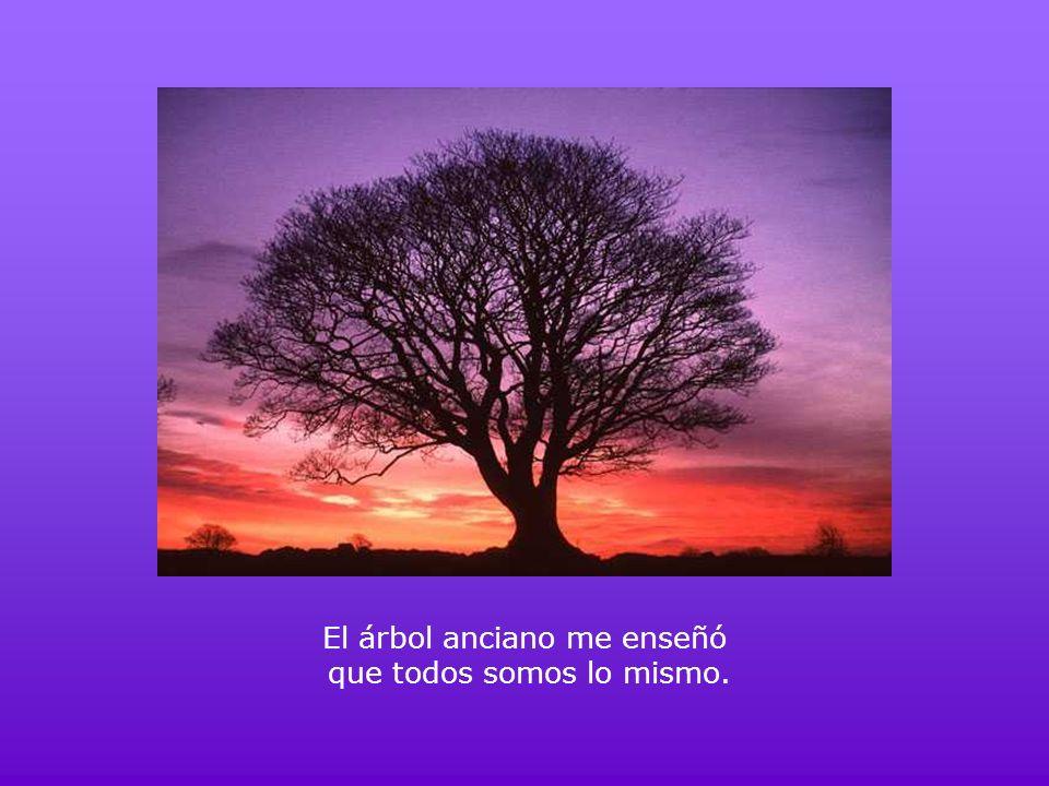 El árbol anciano me enseñó que todos somos lo mismo.
