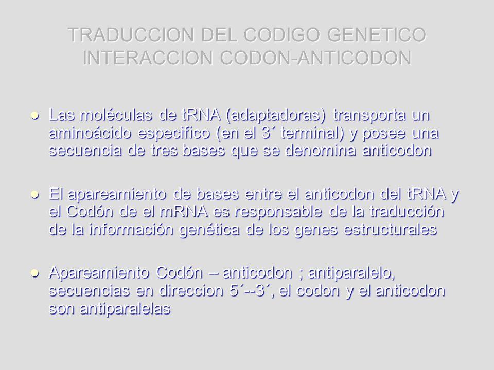 TRADUCCION DEL CODIGO GENETICO INTERACCION CODON-ANTICODON