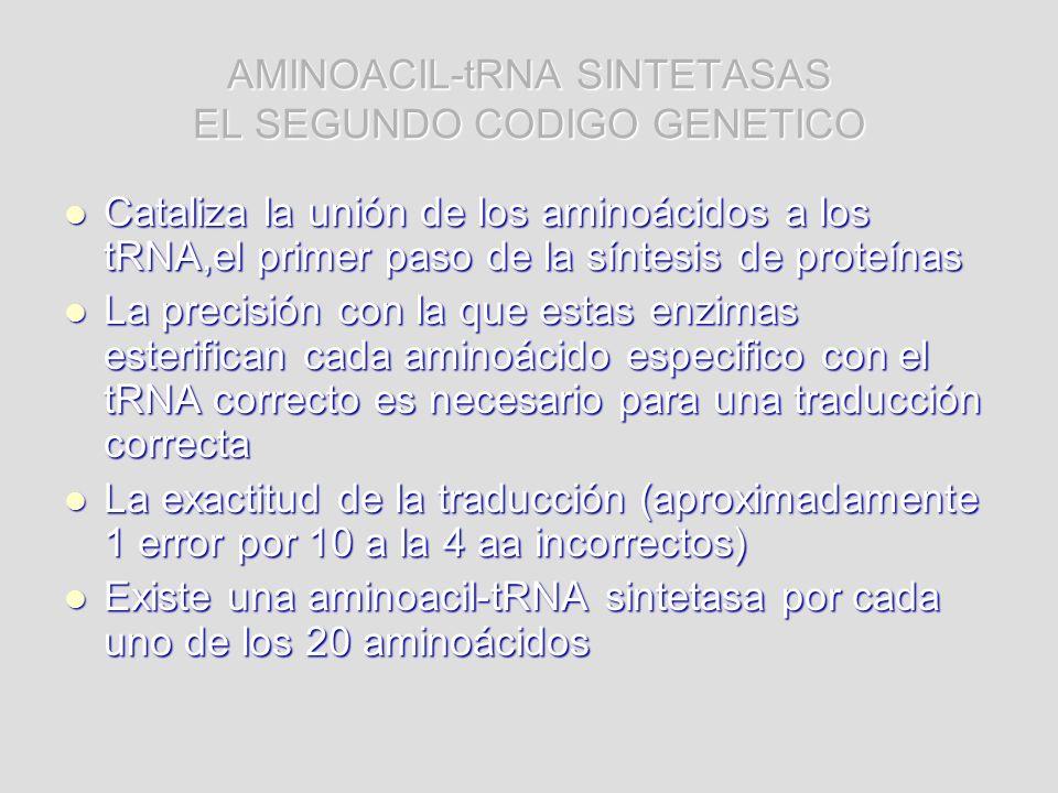 AMINOACIL-tRNA SINTETASAS EL SEGUNDO CODIGO GENETICO