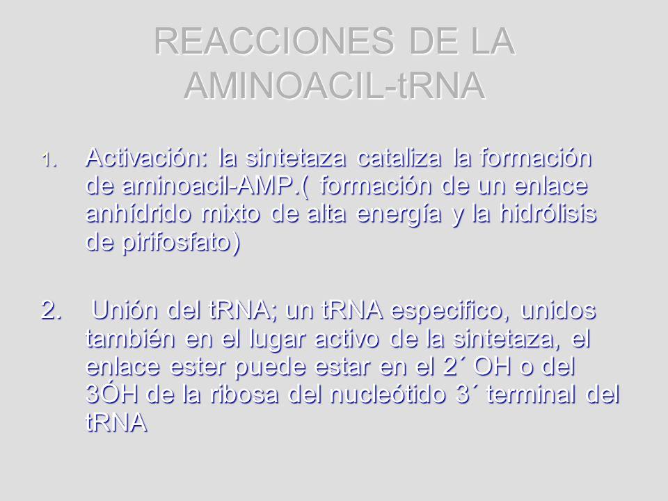 REACCIONES DE LA AMINOACIL-tRNA