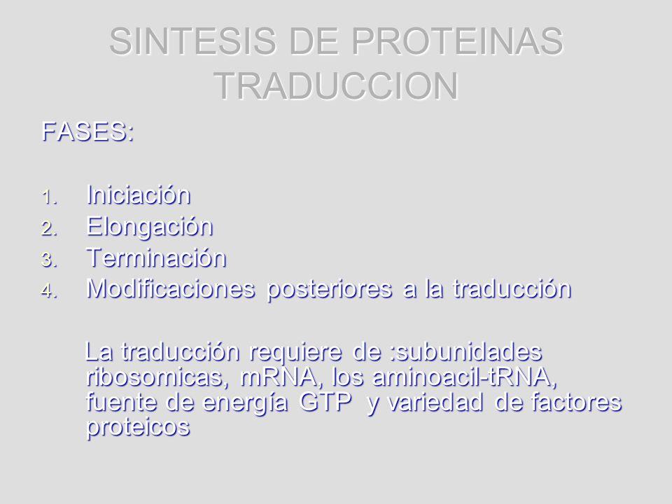 SINTESIS DE PROTEINAS TRADUCCION