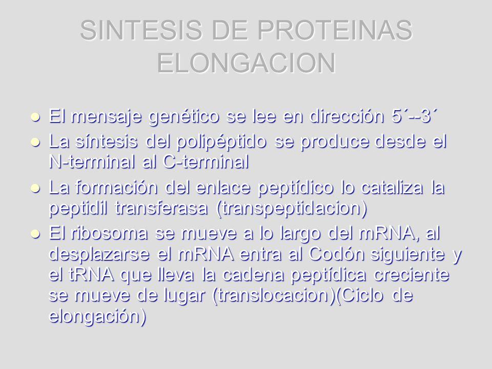 SINTESIS DE PROTEINAS ELONGACION