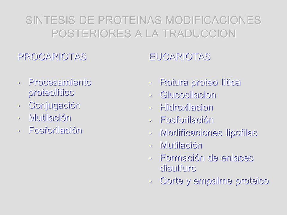 SINTESIS DE PROTEINAS MODIFICACIONES POSTERIORES A LA TRADUCCION