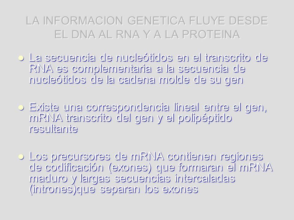 LA INFORMACION GENETICA FLUYE DESDE EL DNA AL RNA Y A LA PROTEINA