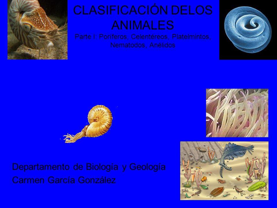 CLASIFICACIÓN DELOS ANIMALES Parte I: Poríferos, Celentéreos, Platelmintos, Nematodos, Anélidos