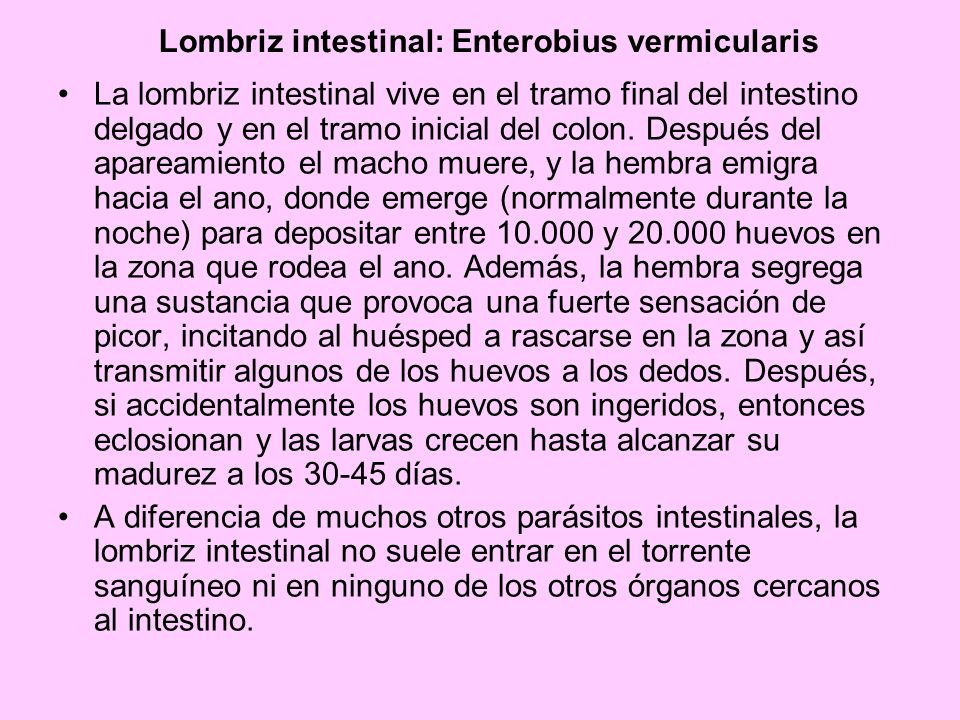 Lombriz intestinal: Enterobius vermicularis