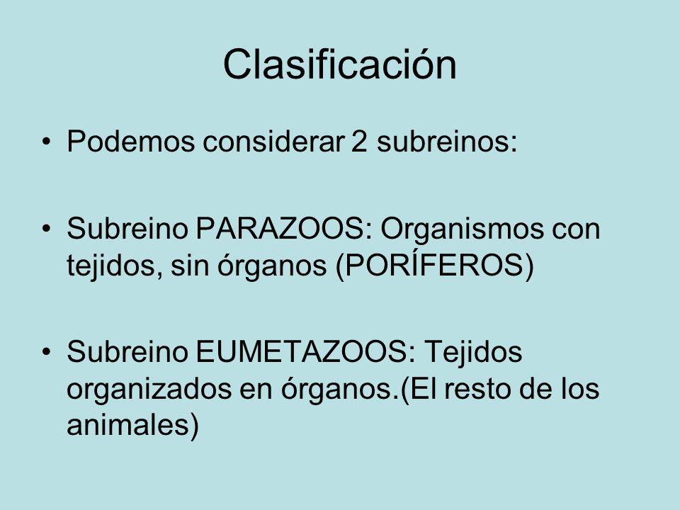 Clasificación Podemos considerar 2 subreinos: