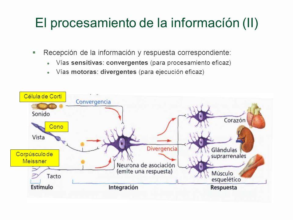El procesamiento de la informacíón (II)