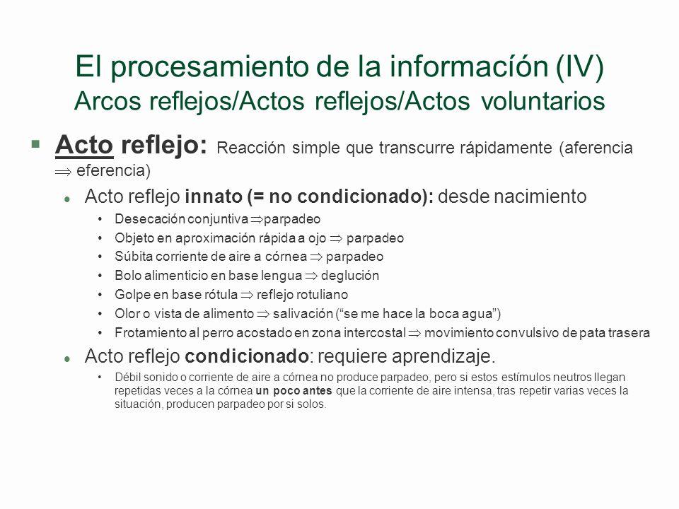 El procesamiento de la informacíón (IV) Arcos reflejos/Actos reflejos/Actos voluntarios
