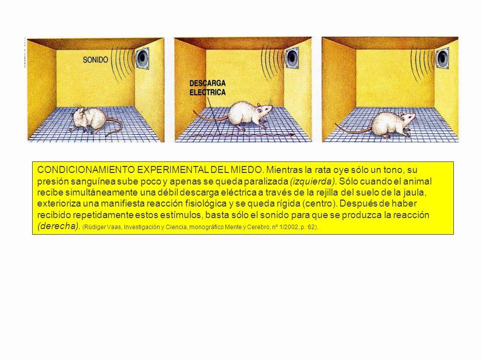 CONDICIONAMIENTO EXPERIMENTAL DEL MIEDO