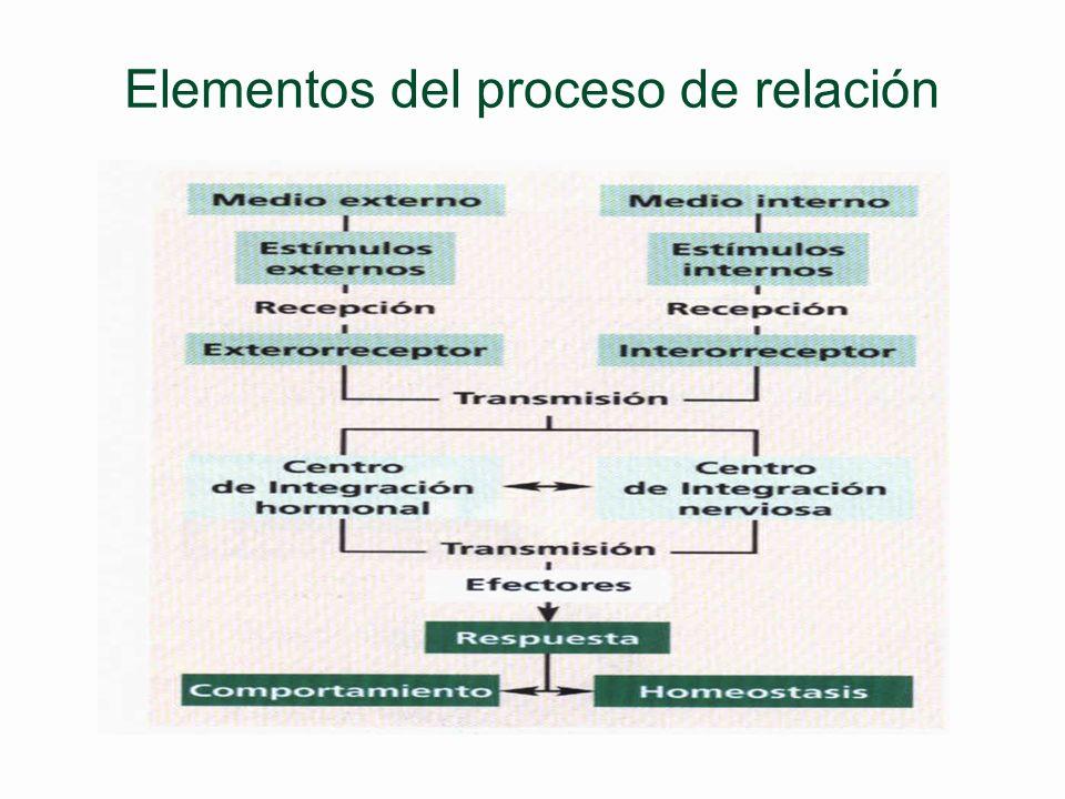 Elementos del proceso de relación