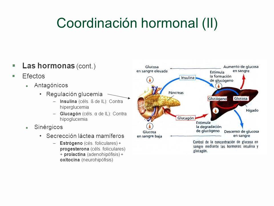 Coordinación hormonal (II)